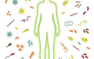 Анализ крови на иммунитет — иммунограмма, как делается, как сдать, что показывает