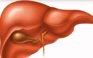 ГГТ (ggt) в биохимическом анализе крови