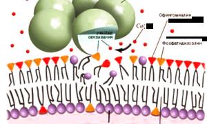 С реактивный белок: нормы и причины повышения