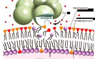 С реактивный белок (СРБ): нормы в анализе крови, причины повышения