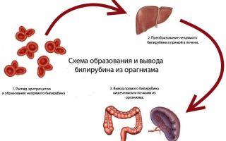 Билирубин: повышен, общий, прямой и норма в крови