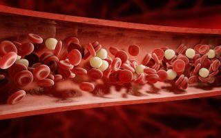 Повышенные триглицериды в крови