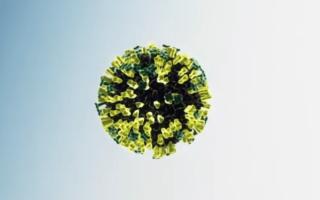 Современные анализы на вирус Эпштейн-Барр (ВЭБ) и их расшифровка