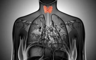 Анализы щитовидной железы на гормоны: нормы и расшифровка