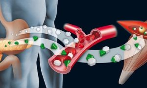 Что показывает анализ крови на инсулин