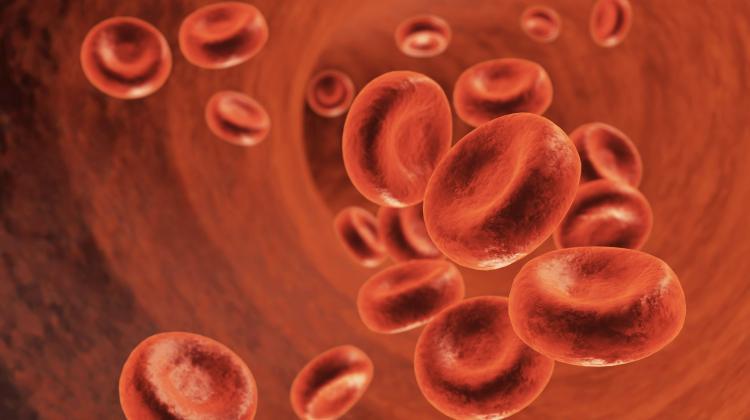 Коэффициент атерогенности (КА): что это? норма в крови, почему повышен и как понизить?