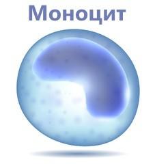 Повышенные моноциты в крови (моноцитоз) у ребенка