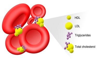 Триглицериды в анализе крови