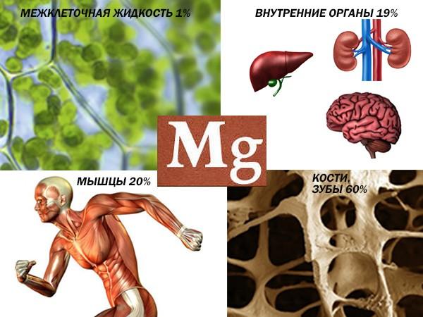 Анализ крови на электролиты (натрий, кальций, магний, хлор, калий)
