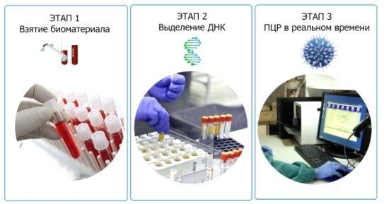 Анализ крови на ПЦР: что это такое? что показывает анализ и как его сдавать?