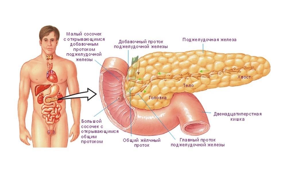 При панкреатите в анализе крови отмечается увеличение thumbnail