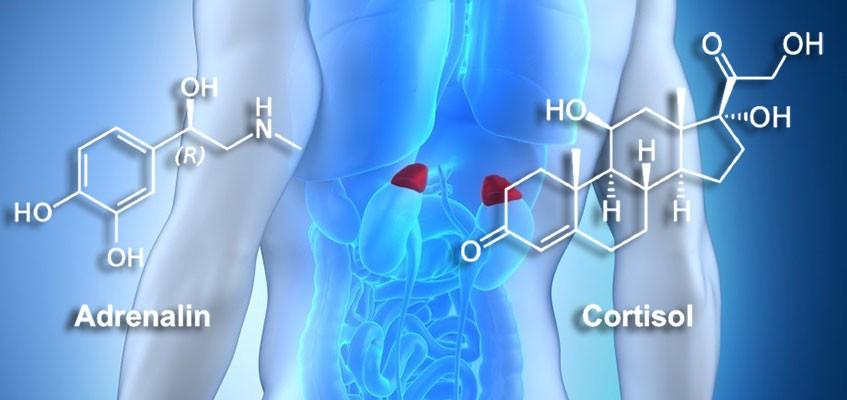 Гормон кортизол: что это такое?