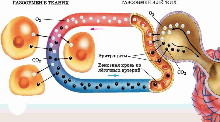 Анализ на газы крови