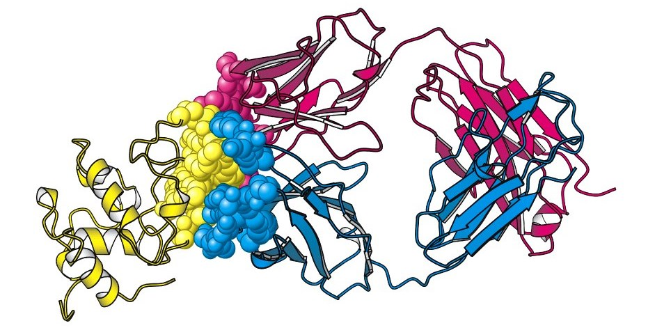 Циркулирующие иммунные комплексы в иммунологической диагностике