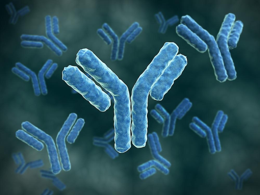 Популярно об иммуноглобулинах